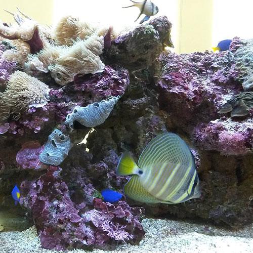 Salzwasseraqarium für Jung und Alt zur Entspannung in unserem Praxisräumen